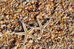 zeesterren op het strand