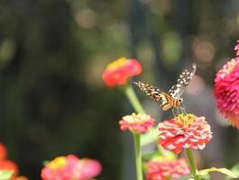 rode bloemen en de vlinder