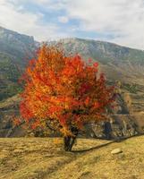 eenzame boom in de herfstseizoen