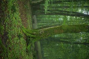 een oude boom bedekt met mos