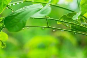 dauw op bladeren in het regenseizoen