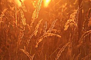 zomer zonsondergang gloed grasveld achtergrond foto