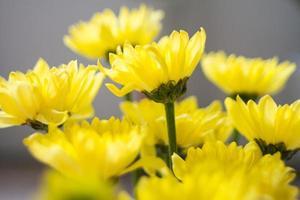 bloem in geel foto