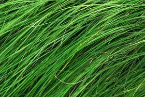 gras in de rij