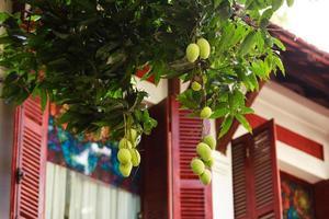 groen mangofruit groeit aan een boom foto