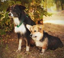 twee schattige honden in het park. we zijn voor altijd vrienden foto