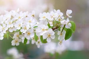 lente boom bloem foto