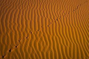 voetafdrukken in de rode woestijn. foto