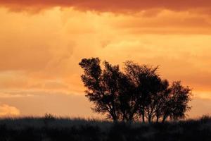 afrikaanse zonsondergang met afgetekende bomen