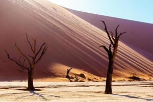 prachtig landschap van verborgen vlei in de woestijn van namib foto