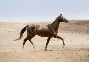 akhal-teke paard dat in woestijn loopt foto