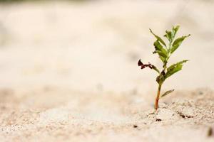 groene plant in een woestijn foto