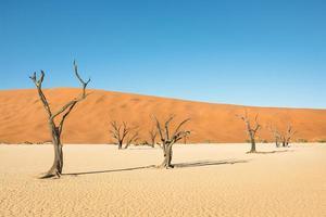 woestijnkratergebied bij deadvlei in sossusvlei in namibië
