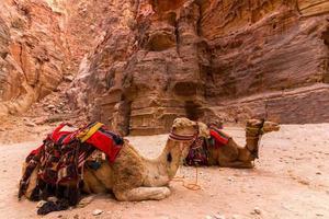 kameel