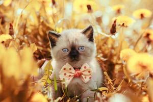 vintage portret van kleine kitten in bloemen foto