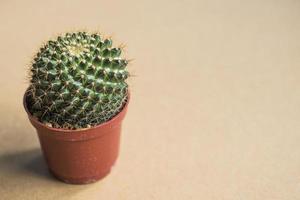 woninginrichting cactus foto