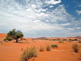 sossusvlei, namibië, afrika foto