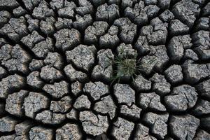 plant in gedroogde gebarsten modder foto