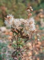 stekelige plant foto