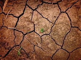 groei tussen gebarsten grond foto