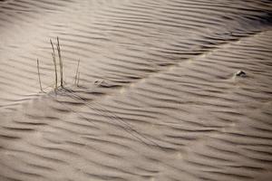 gras groeit uit het zand foto
