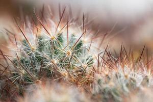 cactus naalden achtergrond foto