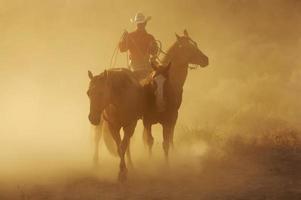 de paarden bijeenronden foto