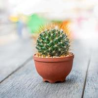 cirkelvormige cactus foto