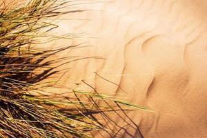 door de wind geblazen gras op zandduin. foto