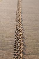 sporen op zand foto