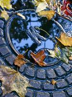 afvoer luik met herfstbladeren foto