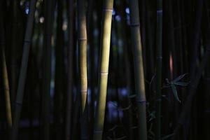 Bamboo Bos foto