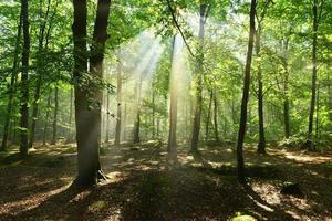 in het bos foto