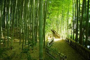 bamboe bos manier