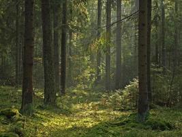 oud groen bos