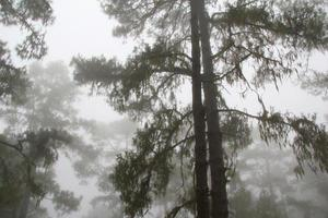 mist in het bos foto