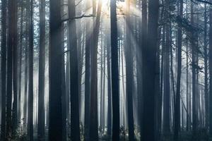 ochtend in het bos foto