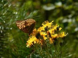 vlinder bos bloemen foto