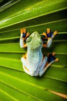 tropisch regenwoud thema foto