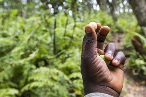 jozani forest, zanzibar, tanzania foto