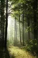 mistig bos bij dageraad foto