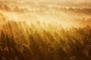 mistig bos in Wit-Rusland
