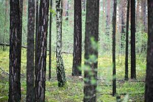 bomen in het bos