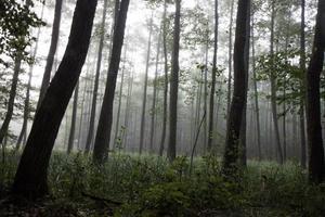 mistig bos in de herfst foto