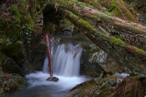 stroom in betoverd bos foto