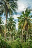 kokosnoot boom bos foto