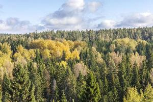 kleurrijke herfst bos foto