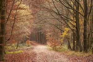 pad in herfst bos foto