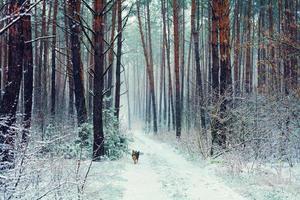 dennenbos in sneeuwstorm