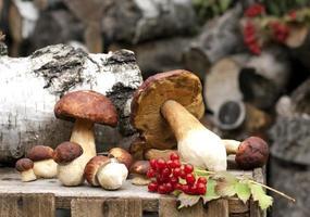 bos eekhoorntjesbrood op houten kist foto